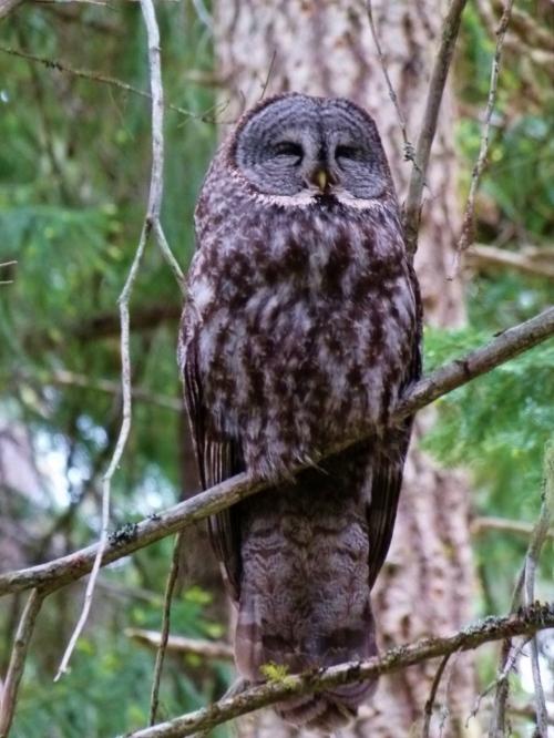 OWL SLEEPZ