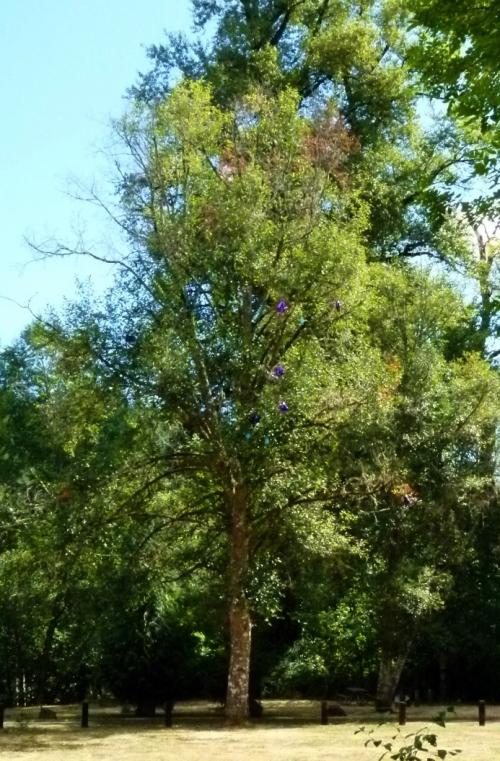BALLOON TREE (960x1280)