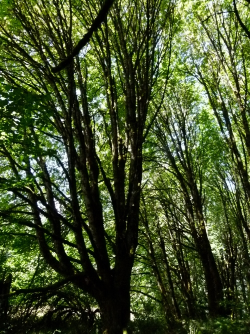 PRRT MTN FOREST (960x1280)