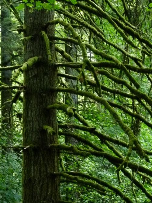 prrt mtn moss (960x1280)