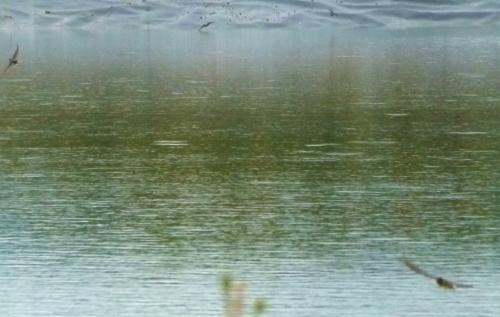 bars at pond (1280x960)