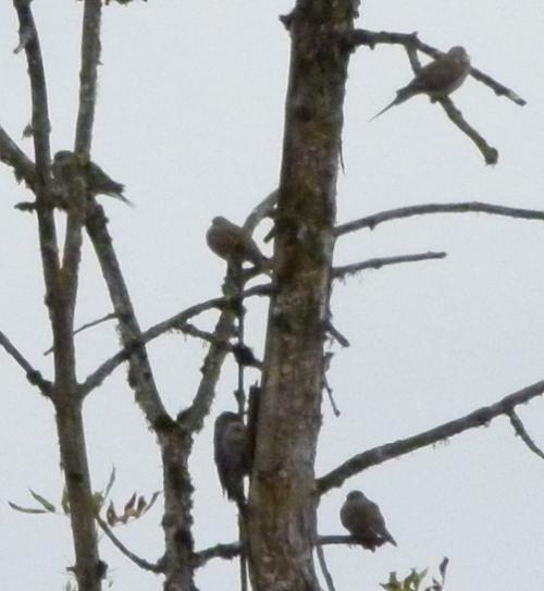 bird cluster (1280x960)