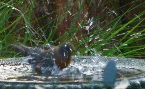 6rob-splash (1280x960)