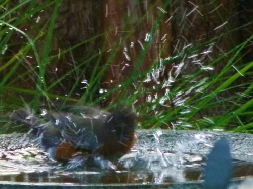 8rob-splash2 (1280x960)