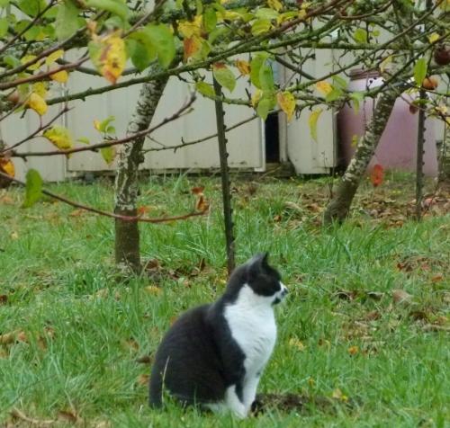 CAT BIRDING (1280x960)
