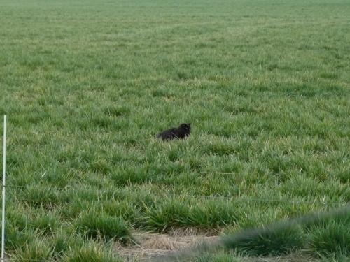 cat huntz (1280x960)