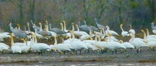 BIG BIRDS1