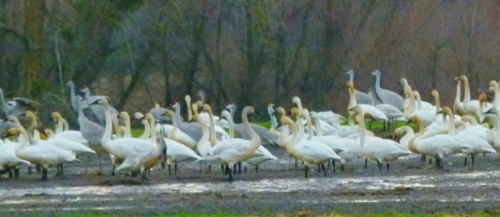 BIG BIRDS2