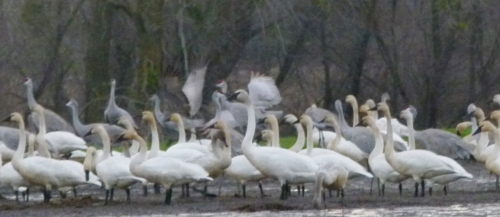 BIG BIRDS3