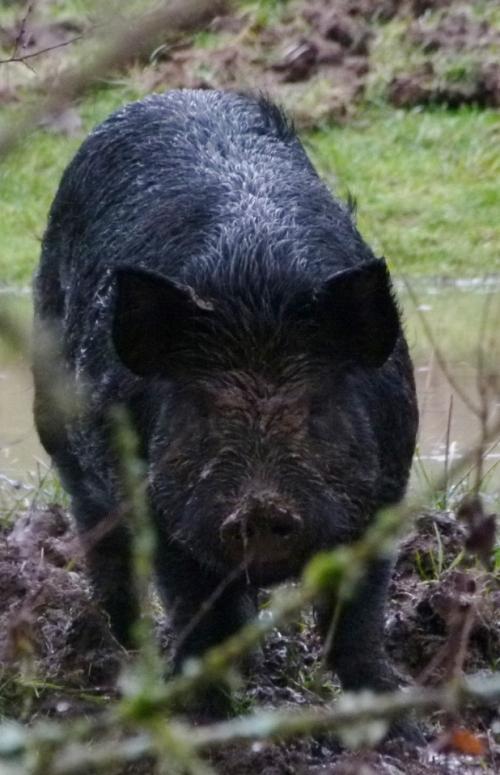 PIGG2
