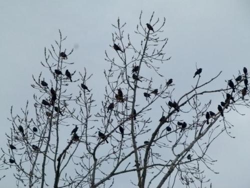rwb flock (1280x960)