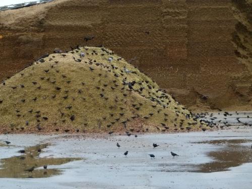 BLCKBIRD HILL