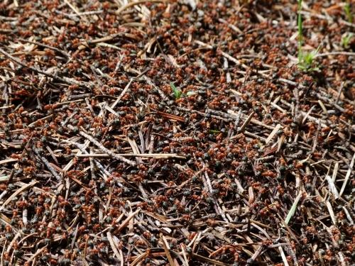 ANTS CRAWL (1280x960)