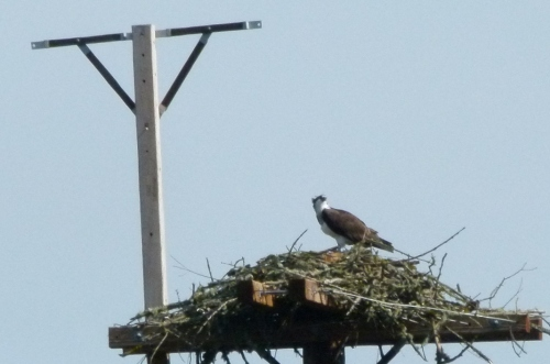 osp-nest