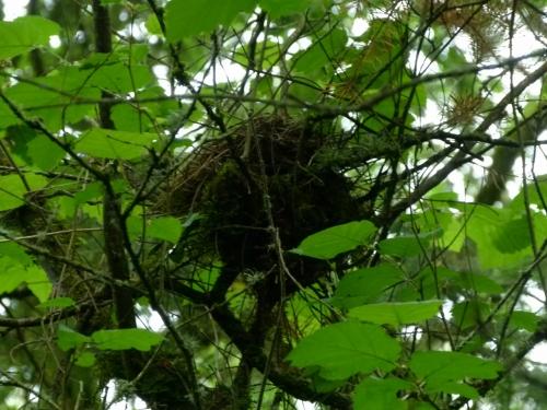 Amro nest (1280x960)