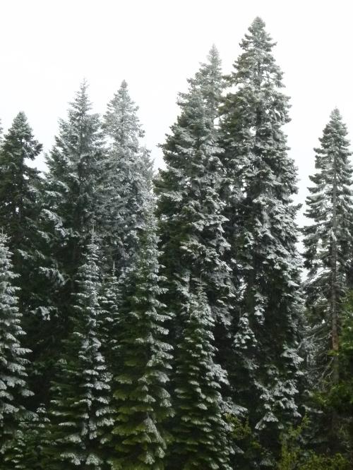 SNO TREES