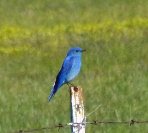 TRUE BLUE CU (1280x960)
