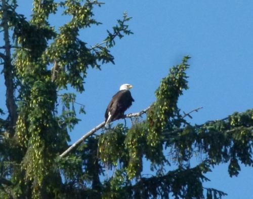 astoria eagle (1280x960)