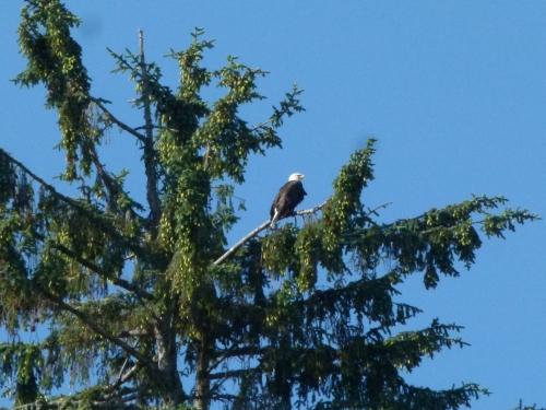 astpria eagle (1280x960)