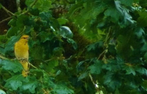 buor-femal-nest (1280x960)