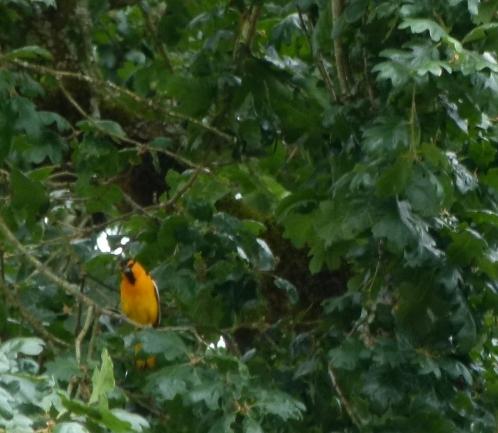 buor--male--nest (1280x960)