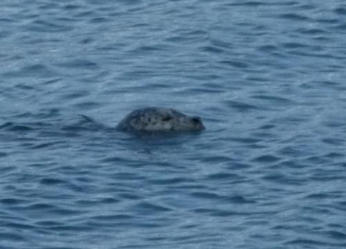 HAR SEAL (1280x960)
