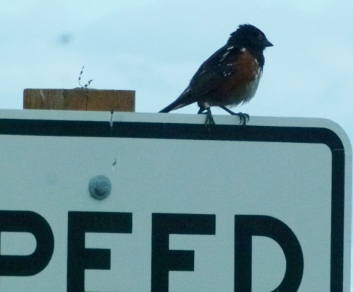 towhee signed up