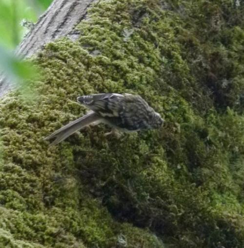 tree creep3