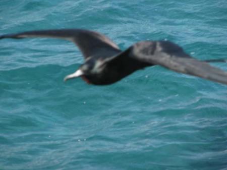 FRIG-BIRD EYELEVEL