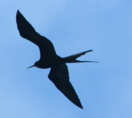 frig-pbird provile