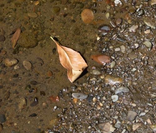 leaf grnd