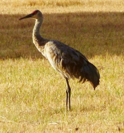 crane-feml-alert