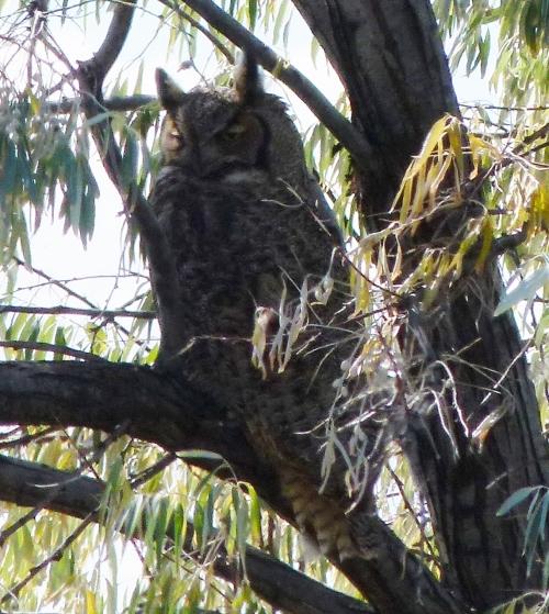 owlin-olive-1143x1280-2