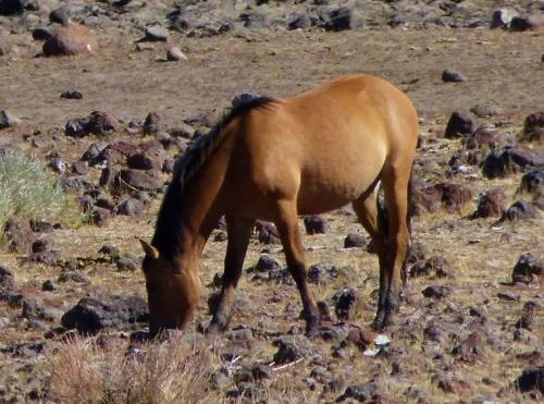 w-horse-1280x960