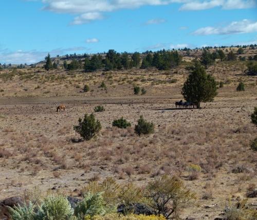 w-horse-valley-1280x960