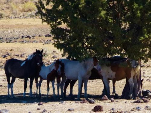 w-horses-1280x960