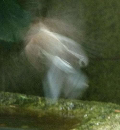 junc-ghost