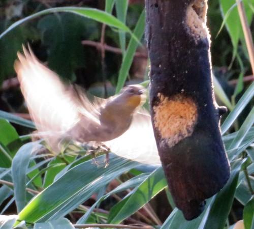 yrw-fluttr2
