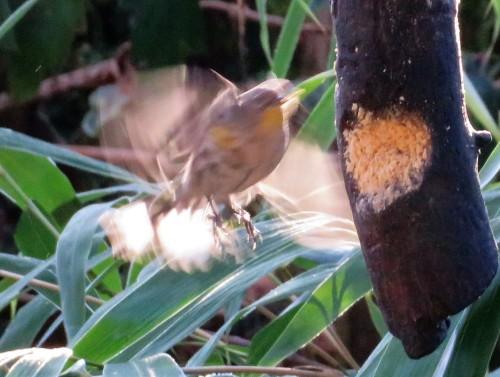 yrw-fluttr3