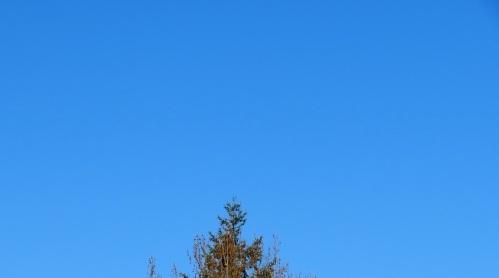 wint-sky
