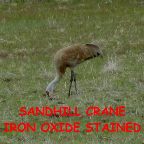 crane-stained