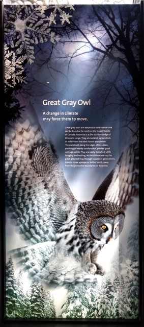 grey-owl-climate