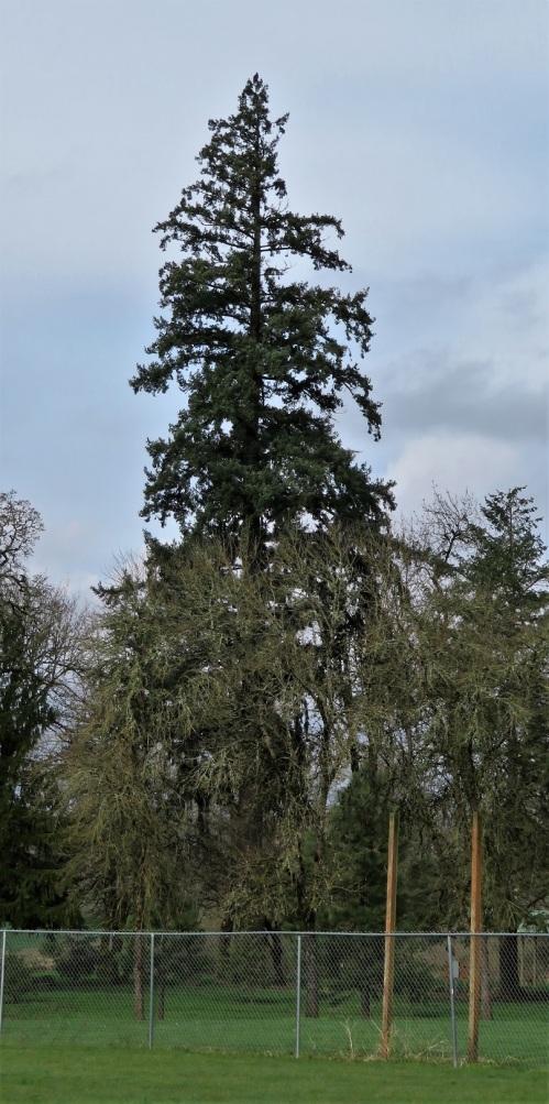 BE-TREE