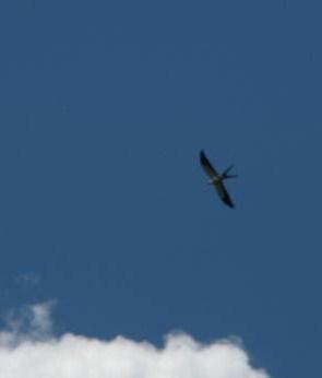 ST Kite over Napo River