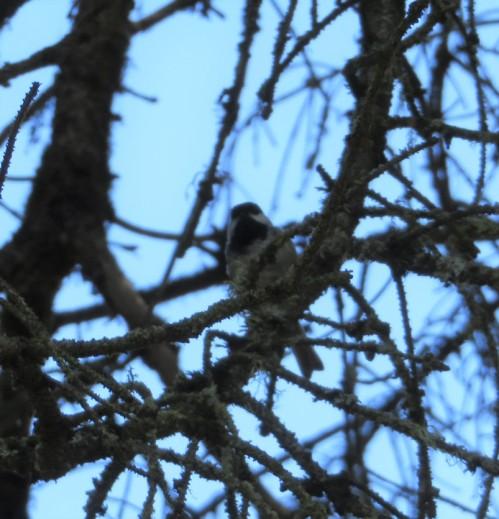 ch in tree