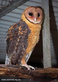 gm owl