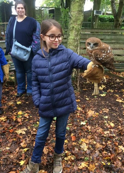 NZ OWL
