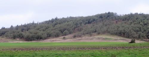 cack-field
