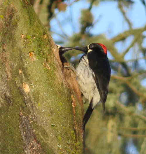 AW-COURTSHIP