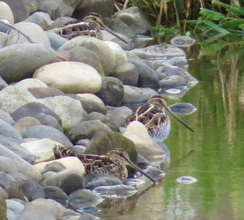 SNIPE-THREE
